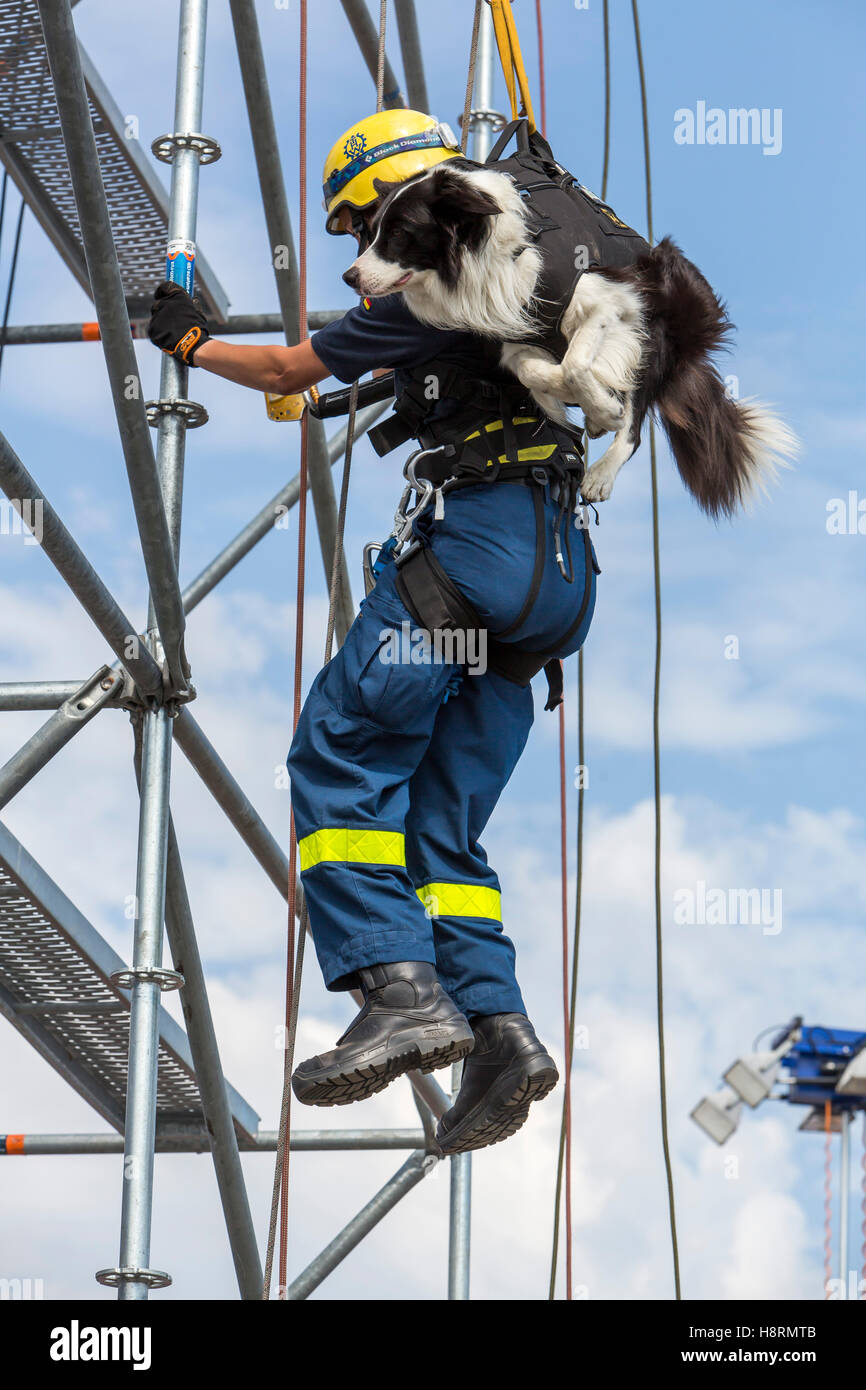 Climbing and abseiling of a dog guide, rescue personal, search and rescue dog, from THW, Federal Agency for Technical Stock Photo