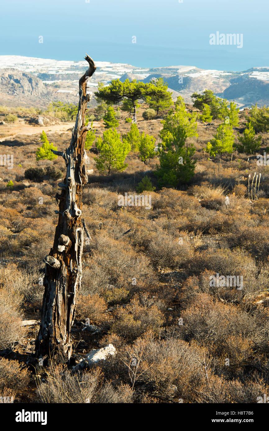 Griechenland, Kreta, Gewächshäuser von Gra Lygia, Blick von Anatoli - Stock Image