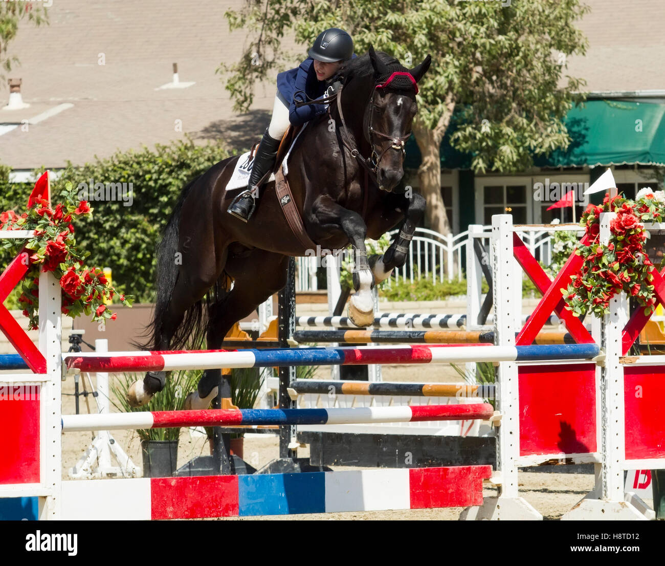 Female Rider On Black Horse Jumping Over Hurdles Stock Photo Alamy