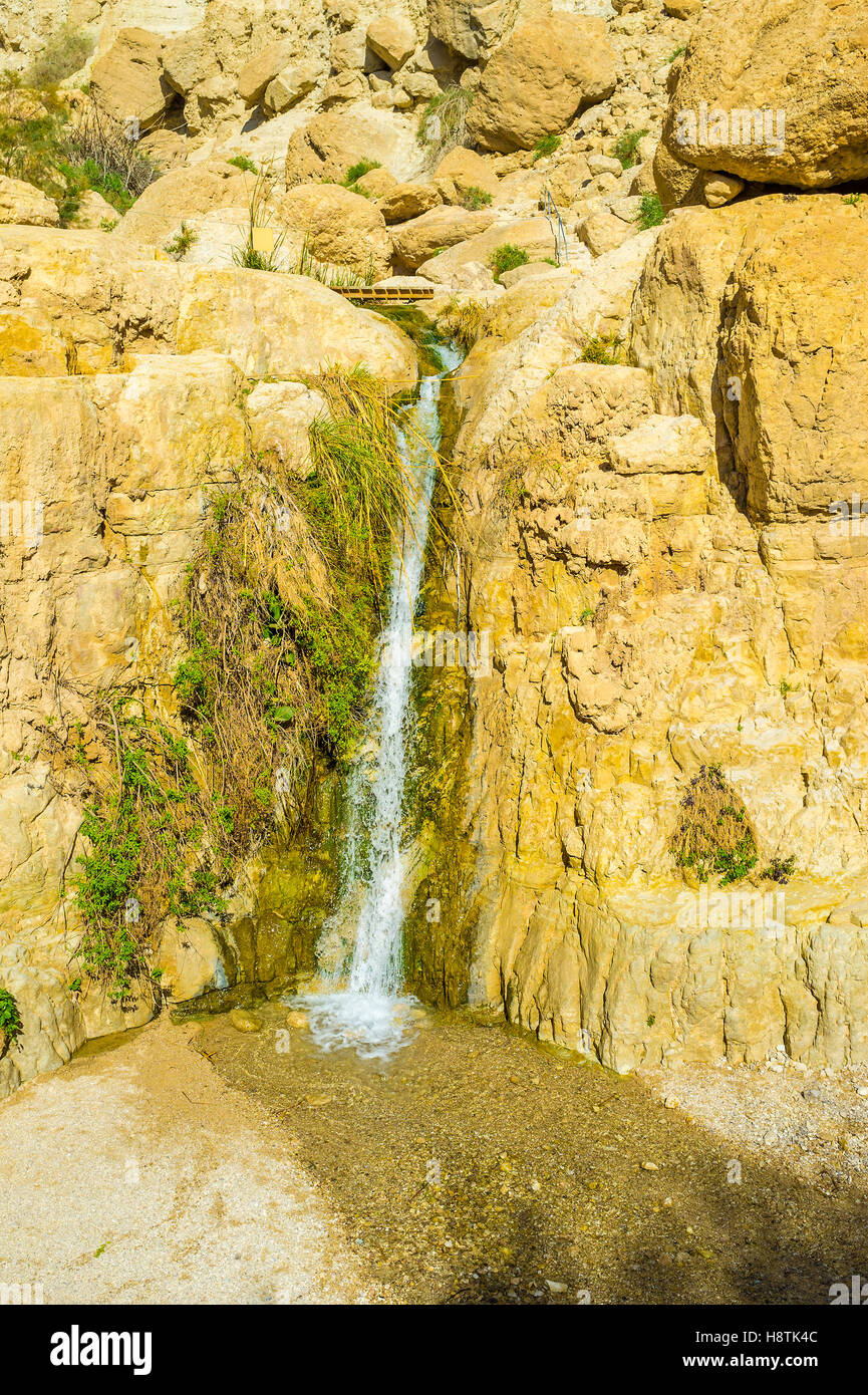 The Tiny Spring Among The Dry Yellow Rocks In Ein Gedi Oasis Israel