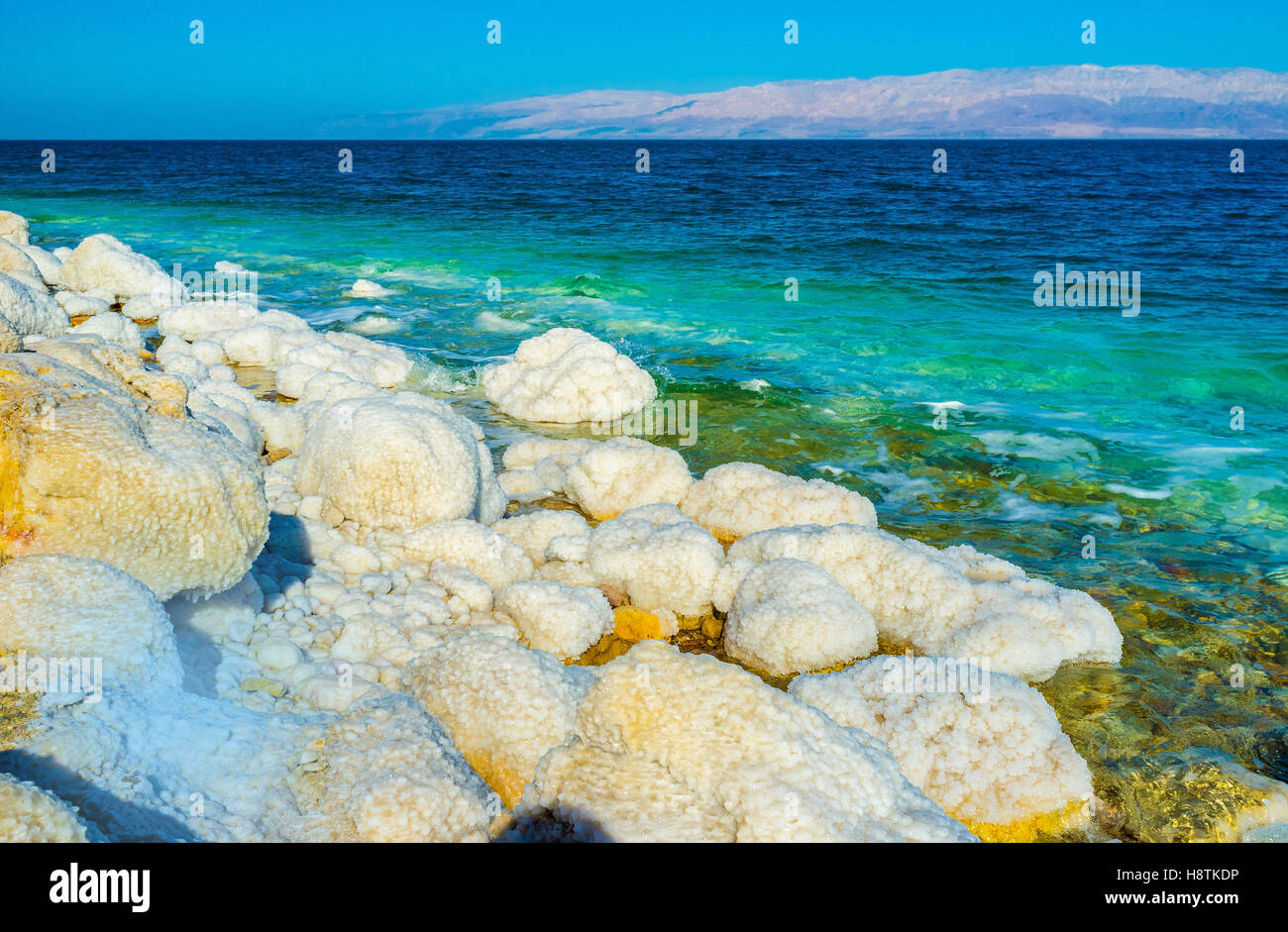 The harsh environment of the Dead Sea due to its salinity, making it completely uninhabited, Ein Gedi, Israel. - Stock Image
