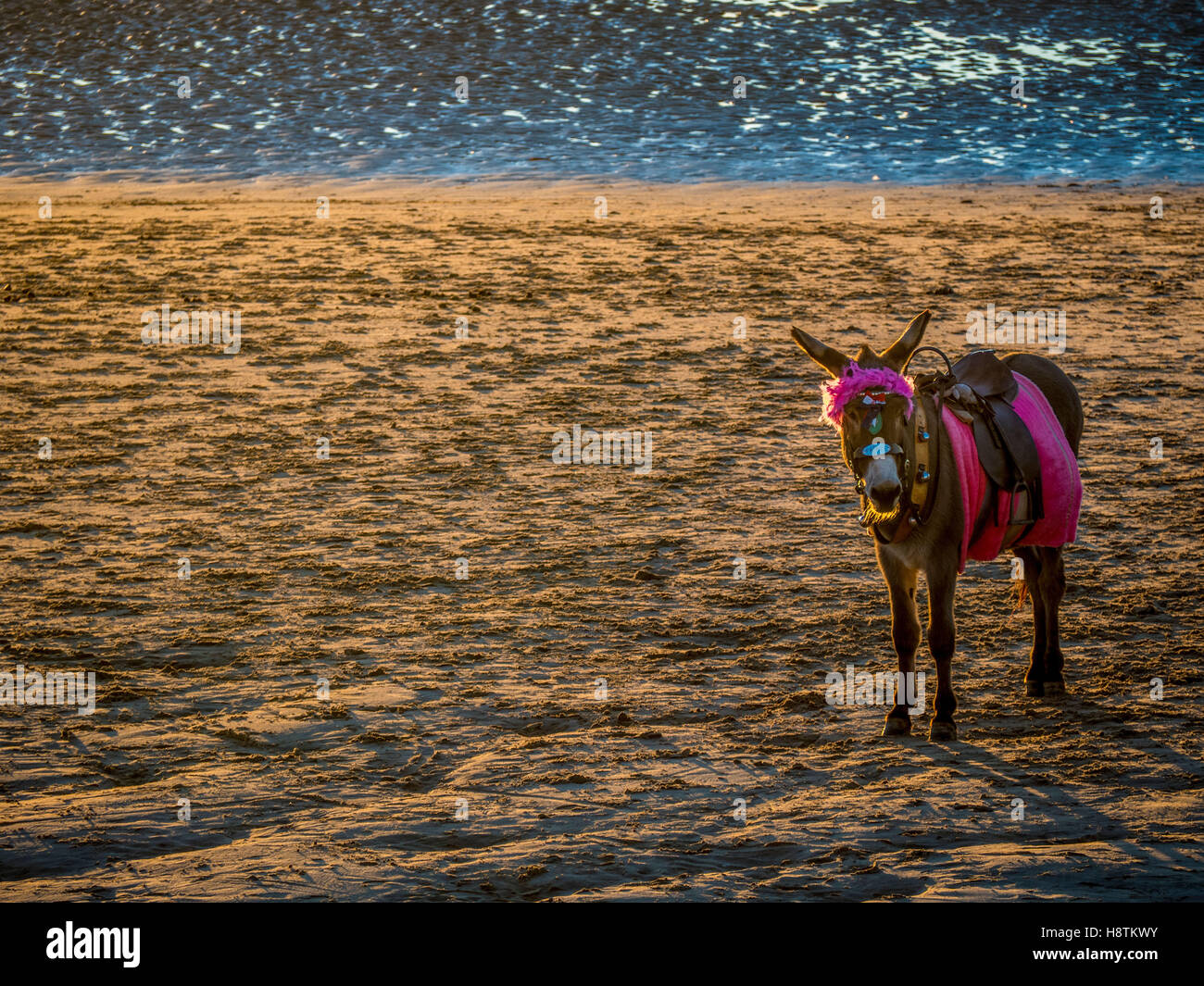 Donkey on beach, Blackpool, Lancashire, UK. Stock Photo