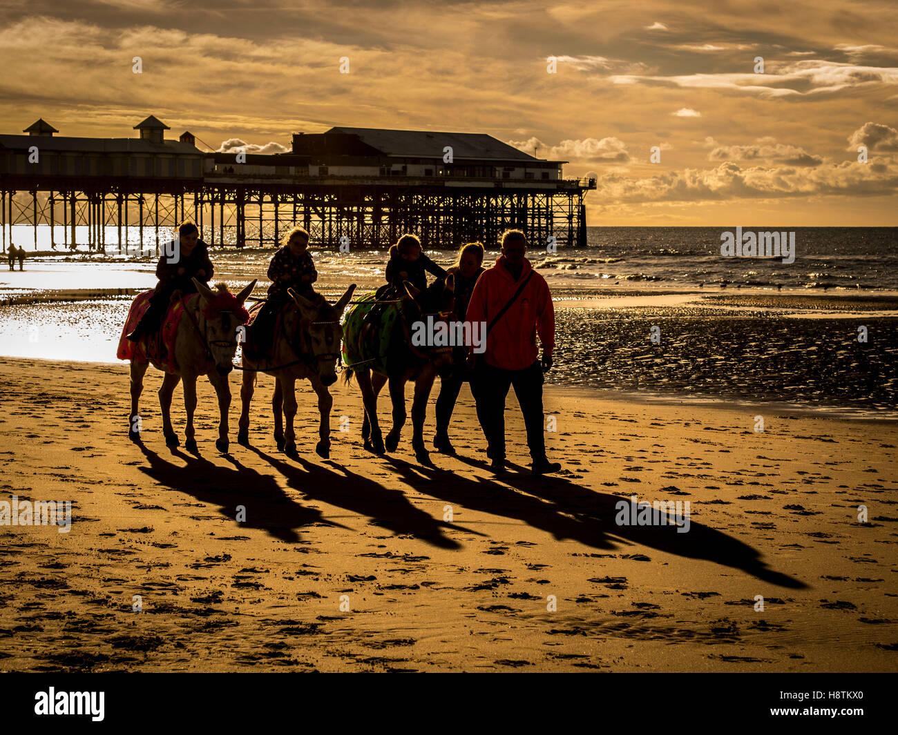 Donkeys on beach, Blackpool, Lancashire, UK. - Stock Image