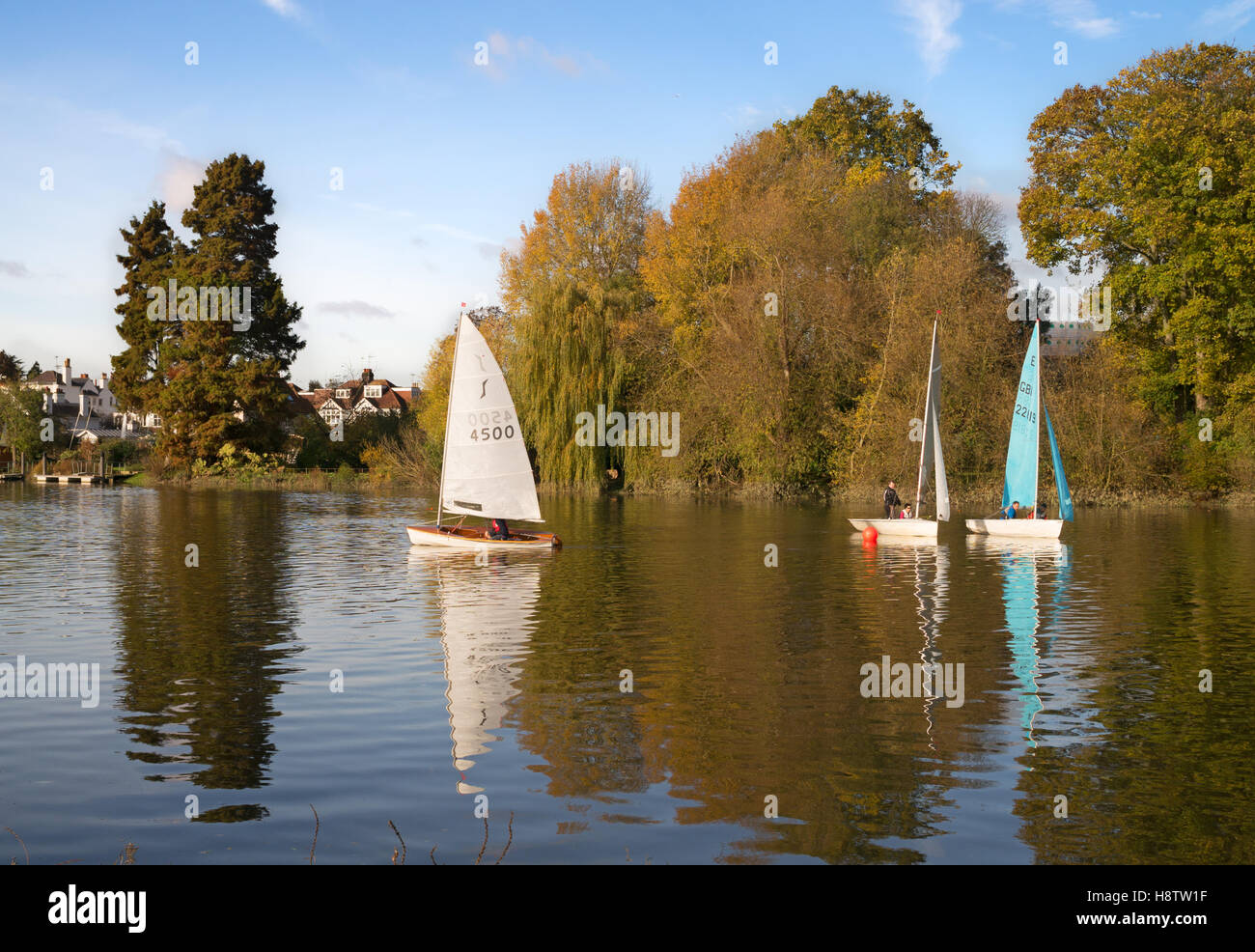 Sailing dinghies from Twickenham Yacht Club, racing on the river Thames, London, England, UK - Stock Image