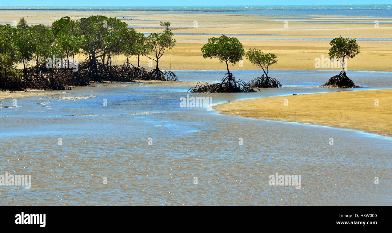 Landscape of a wild beach with Australian mangroves on the Pacific ocean in the tropical north of  Queensland, Australia. - Stock Image
