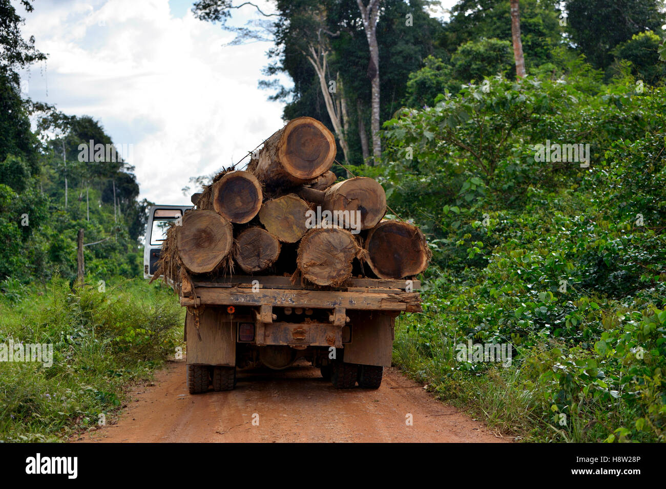 Trucks loaded with tree trunks, illegal logging, Amazon rainforest timber, Trairão District, Pará, Brazil - Stock Image