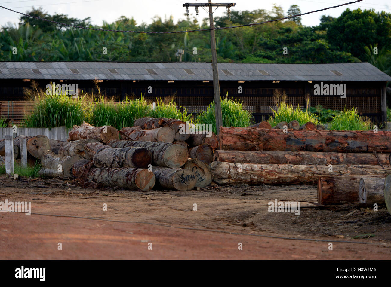 Sawmill, illegal logging, Amazon rainforest, Trairão, Trairão District, Pará, Brazil - Stock Image