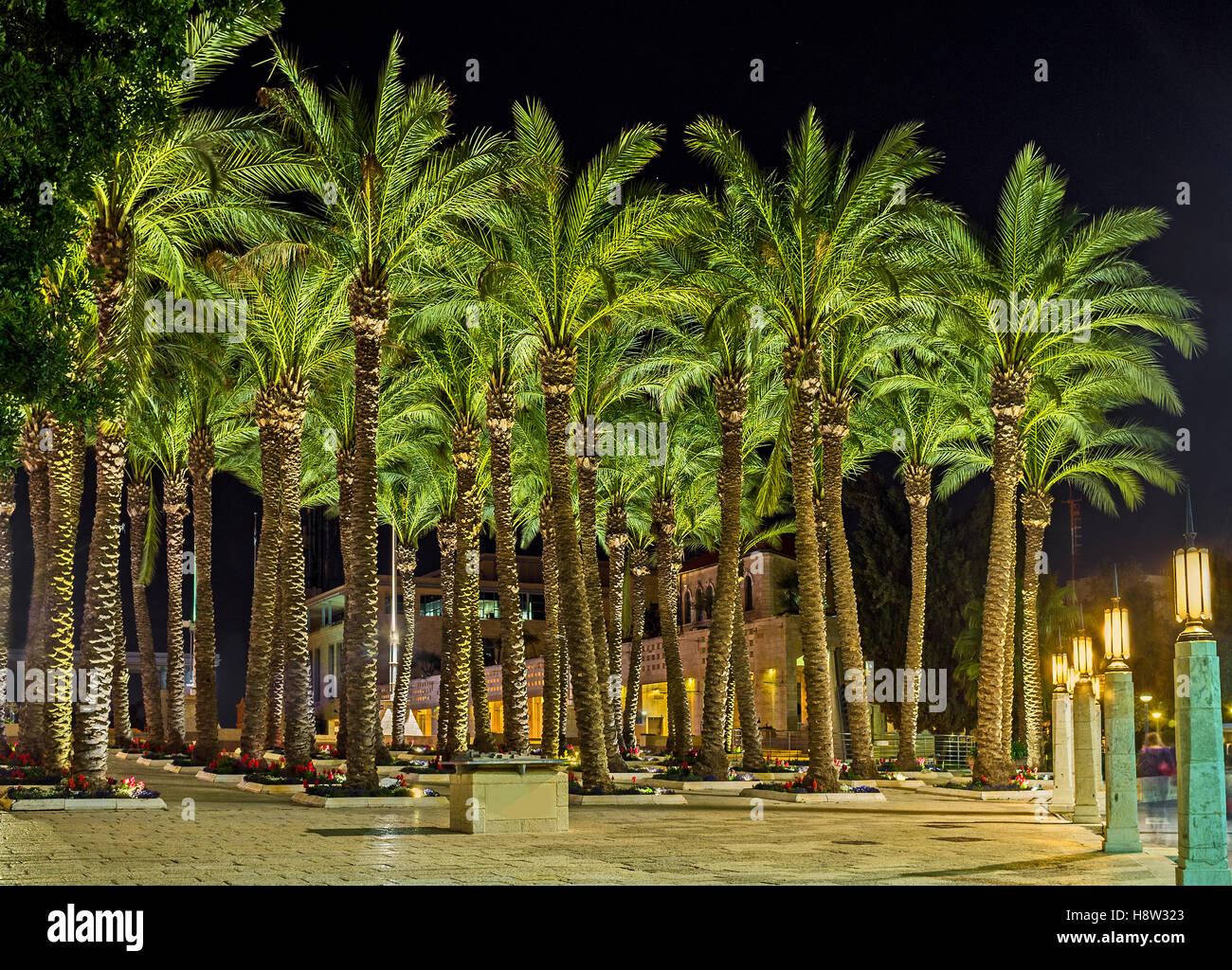 Israel Palm Trees Stock Photos & Israel Palm Trees Stock Images - Alamy