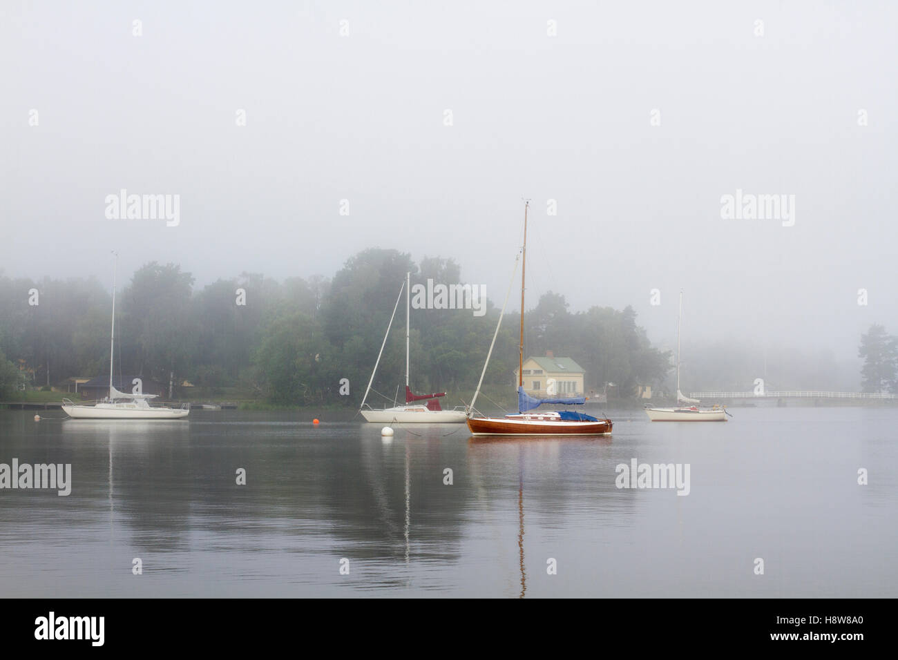 foggy morning - Stock Image