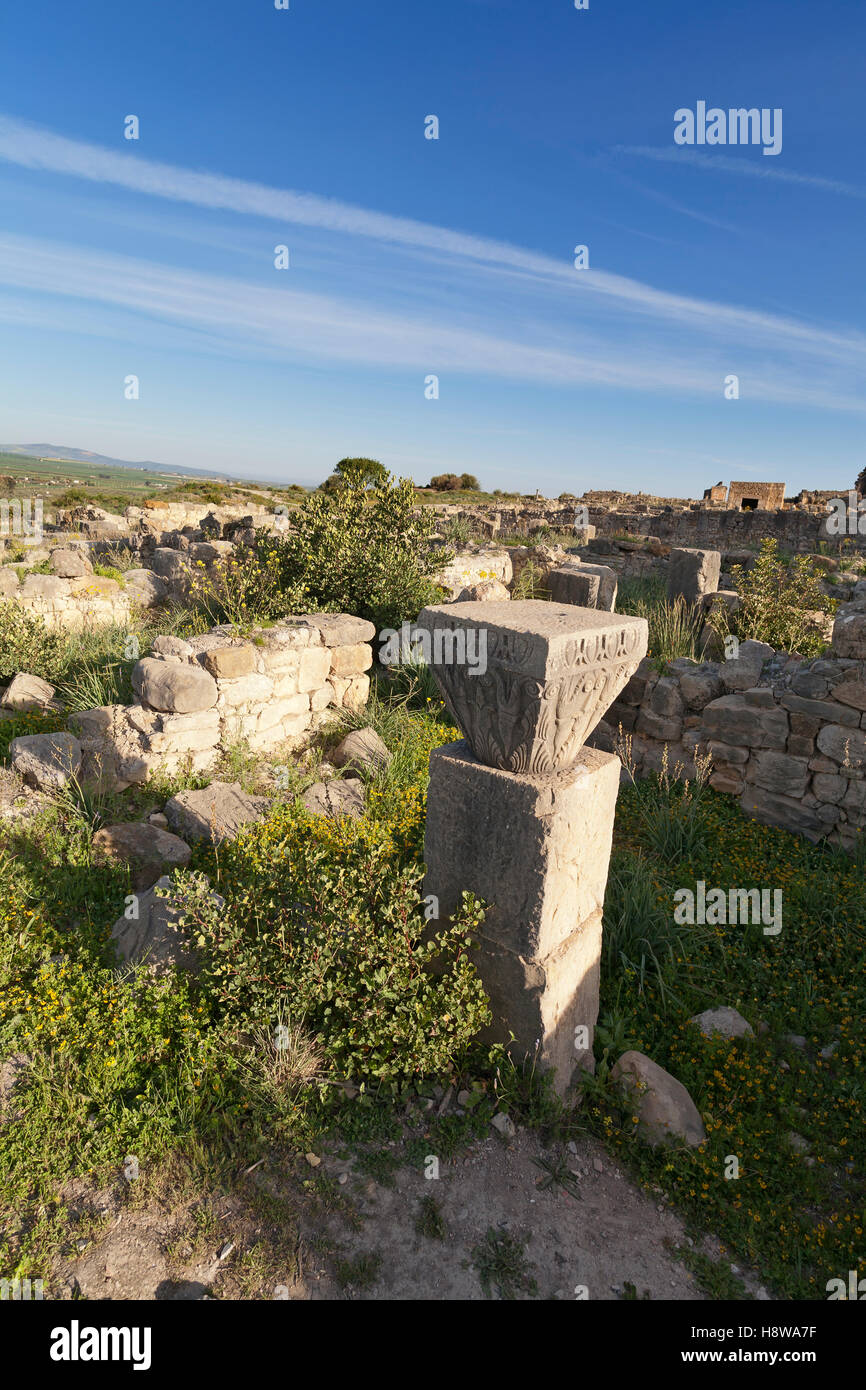 overgrown ruins in the ancient town of Volubilis in the Zerhoun Massif area of Morocco - Stock Image