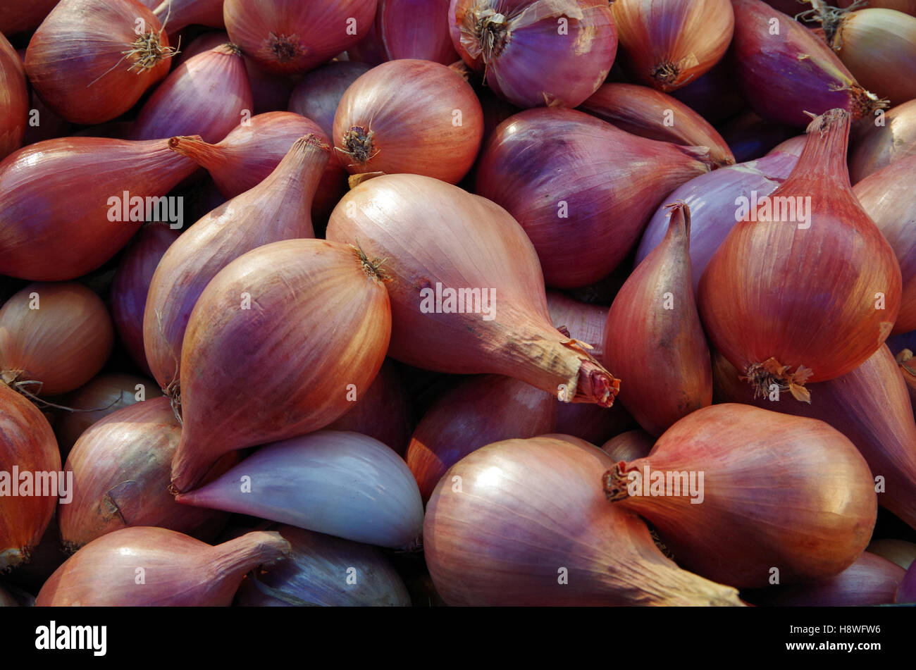 Shallots piled for market - Stock Image