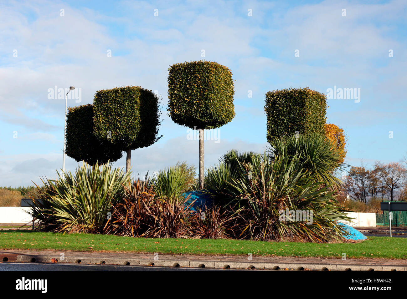 Lollipop Topiary High Resolution Stock Photography And Images Alamy