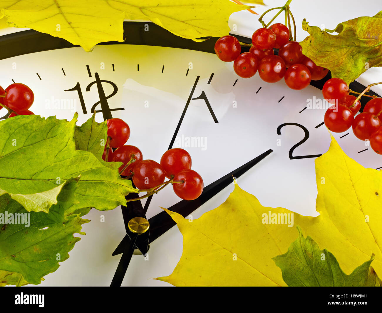 Fall back, winter time. Clock face with viburnum and leaves. Stock Photo