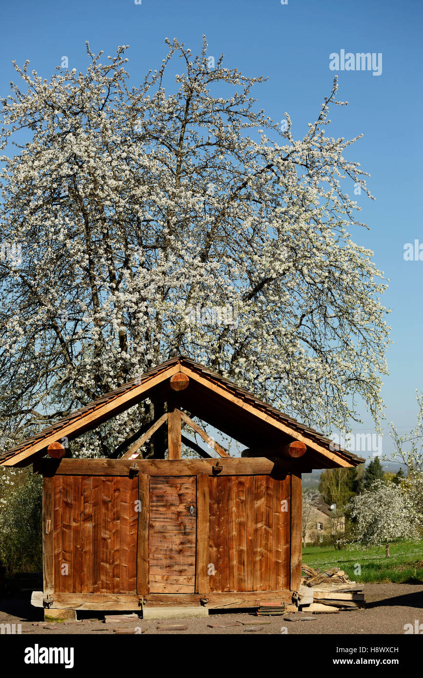 Chalot and Cherry blossoms - Franche-Comté France Stock Photo