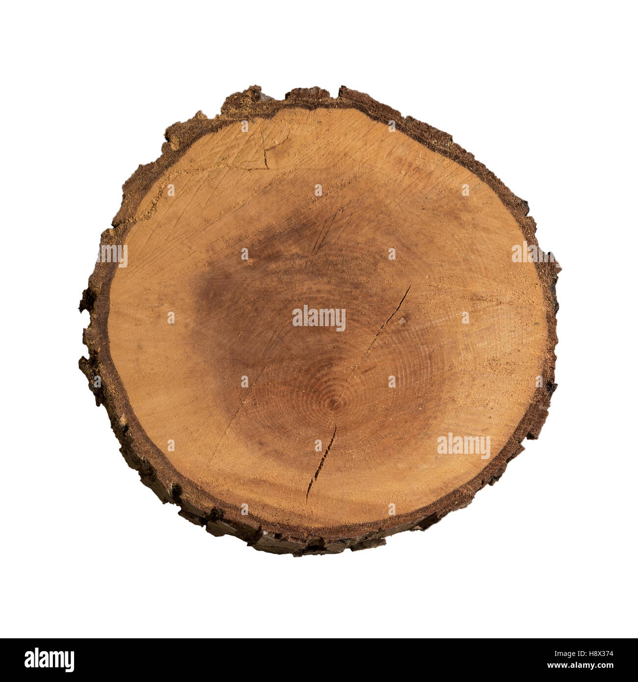 Image of an isolated slice of wood from tree trunk. Stock Photo