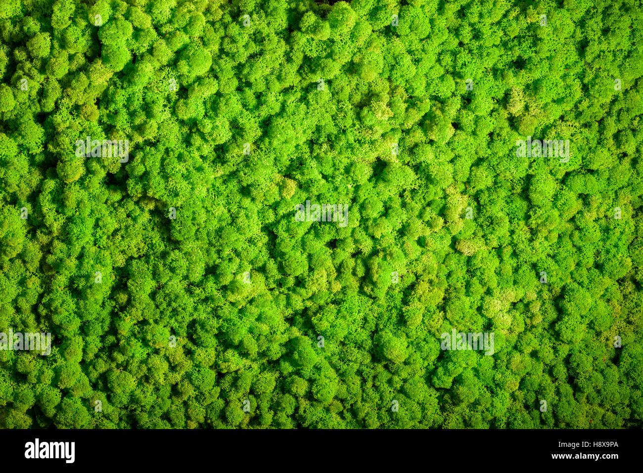 reindeer moss wall green wall decoration made of reindeer lichen stock photo 125968258 alamy. Black Bedroom Furniture Sets. Home Design Ideas
