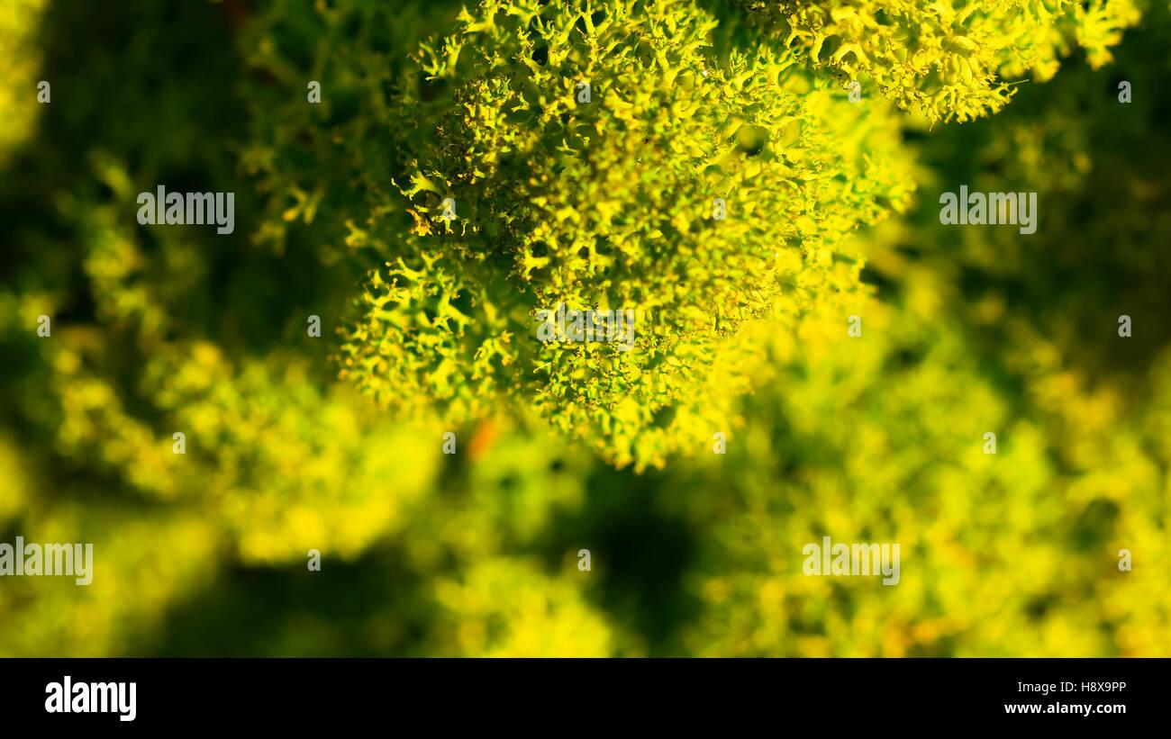 Moss Wall Interior Stock Photos & Moss Wall Interior Stock Images ...