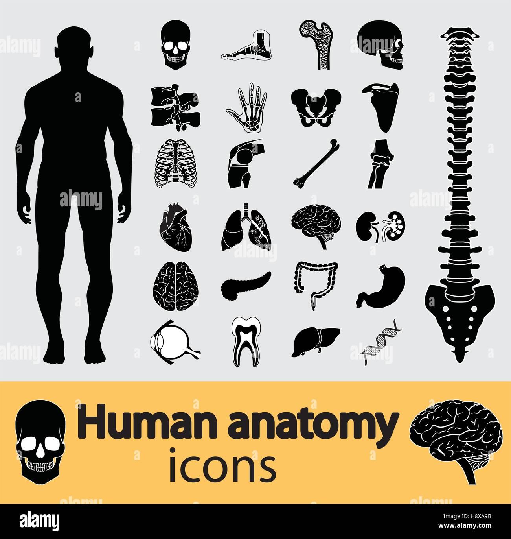 Human anatomy black & white icon set - Stock Image