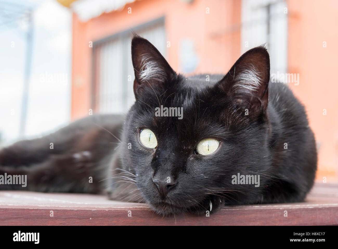 Black cat resting on a table - Stock Image