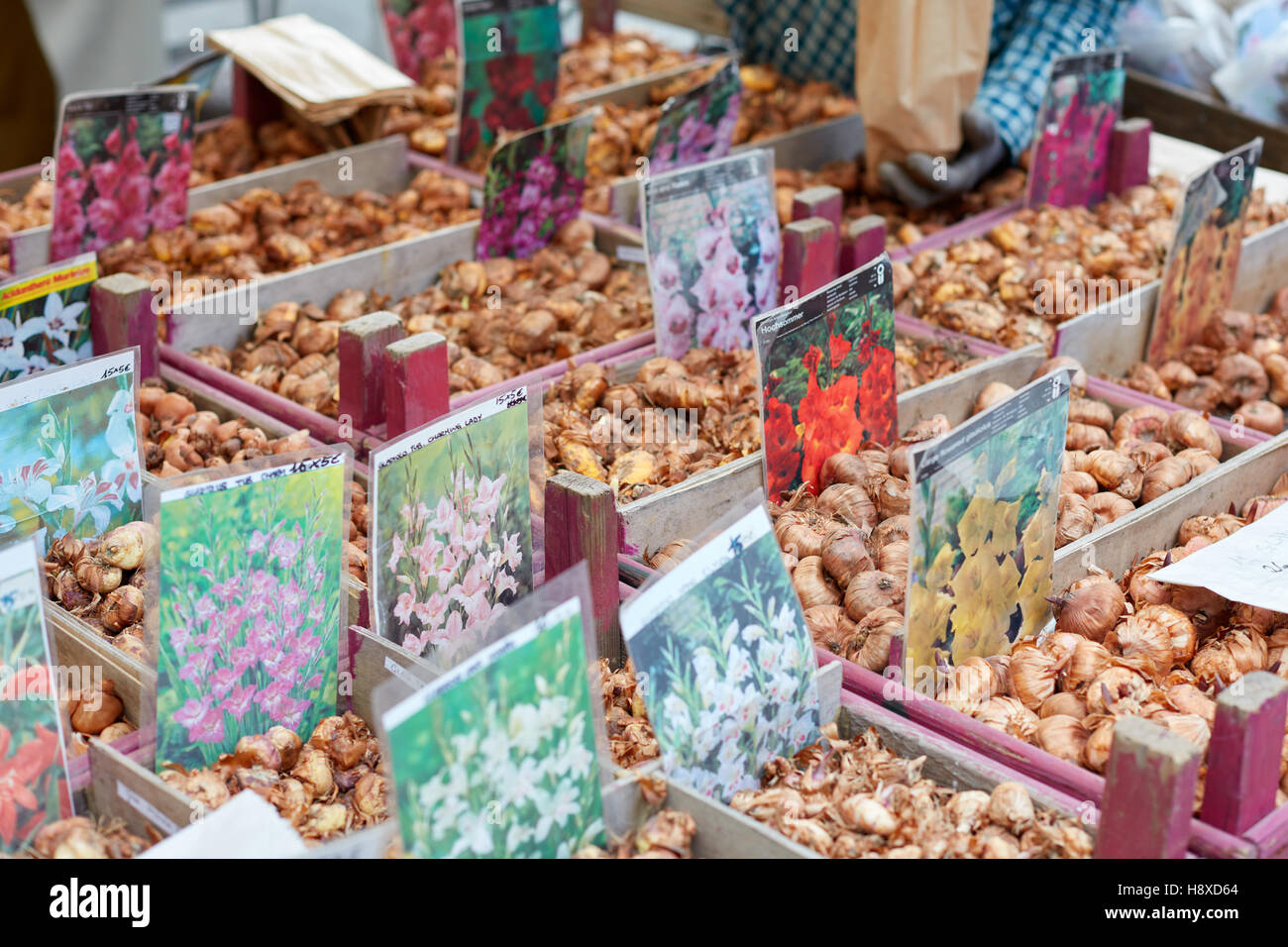 Flower bulbs on sale at Orticola fair in Milan, Italy. Orticola is an annual exhibition and fair of plants and flowers. Stock Photo