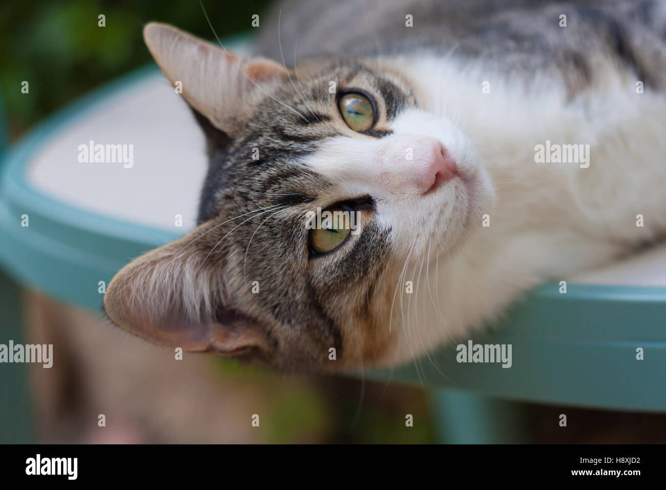 wide eyed cat - Stock Image