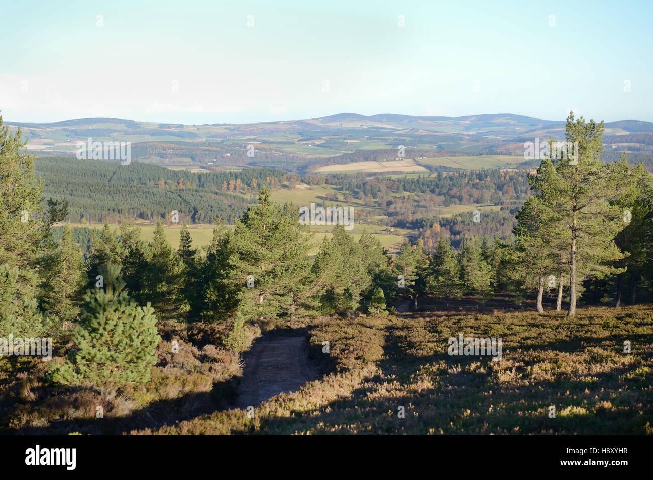 Caledonian pine forest regeneration on Ballogie estate Aberdeenshire Scotland - Stock Image