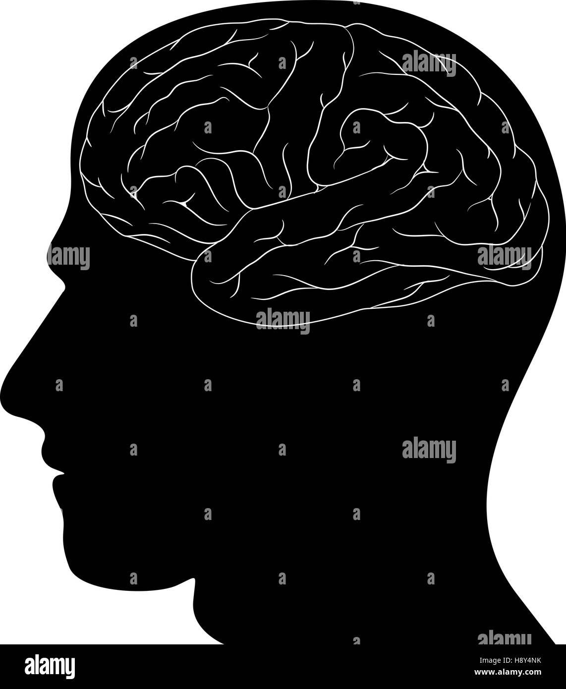 Head and Brain - Stock Image