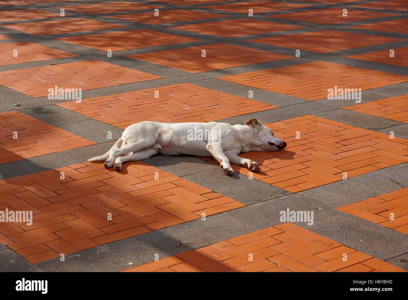 Sleeping dog soaks up the sun in Piazza Sant Andrea, Milo, Sicily - Stock Image