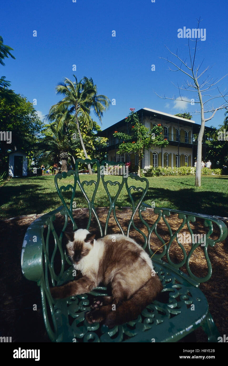 The Ernest Hemingway Home and Museum cats. Key West. Florida. USA Stock Photo
