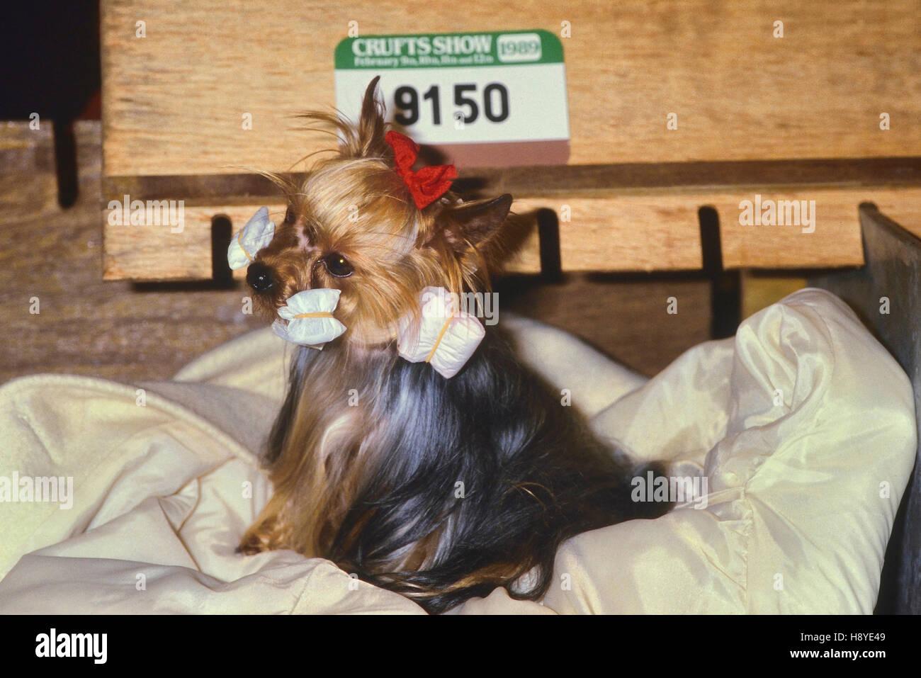 Crufts dog show. Earls Court. London. Circa 1989 - Stock Image