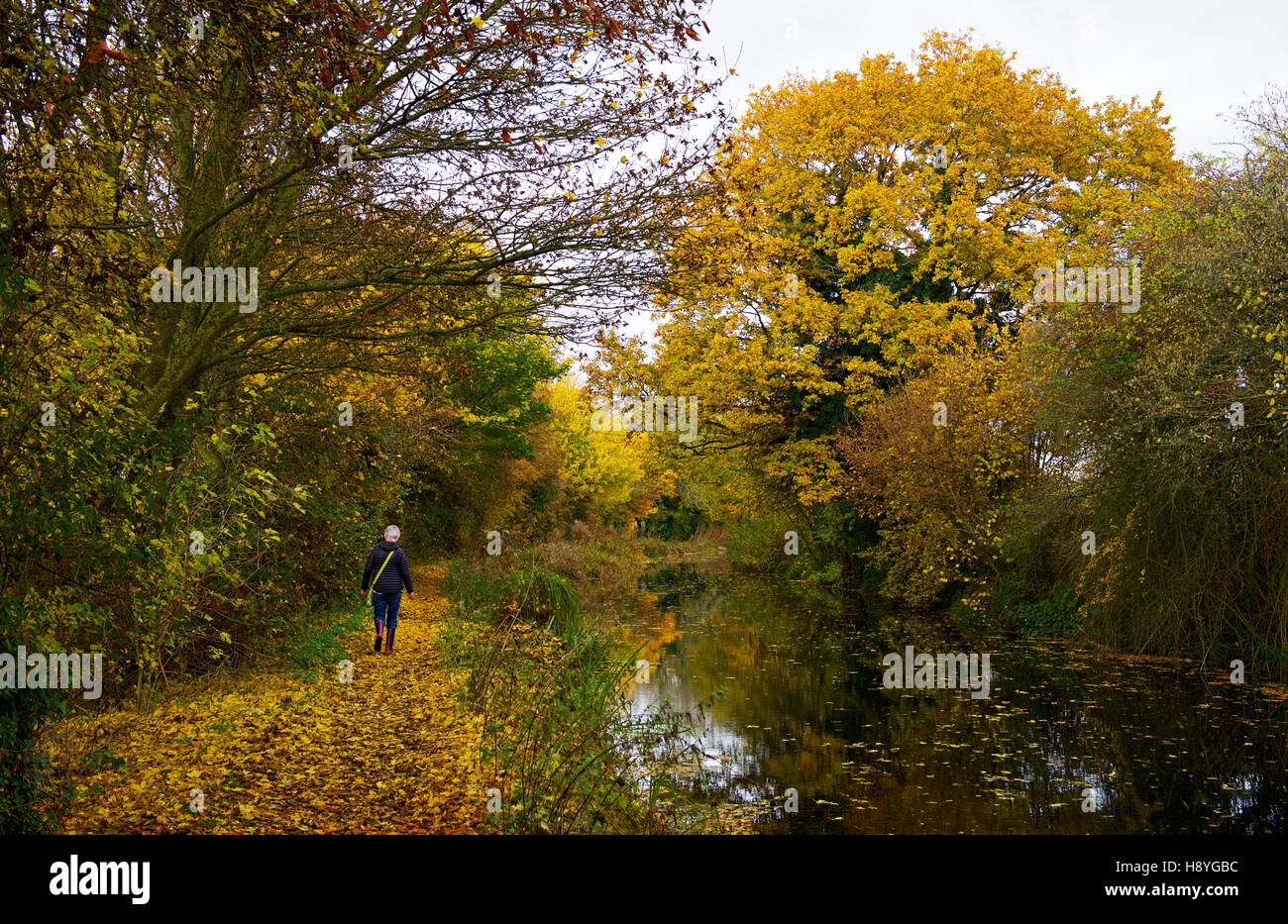 The Basingstoke Canal near Winchfield, Hampshire, England UK - Stock Image