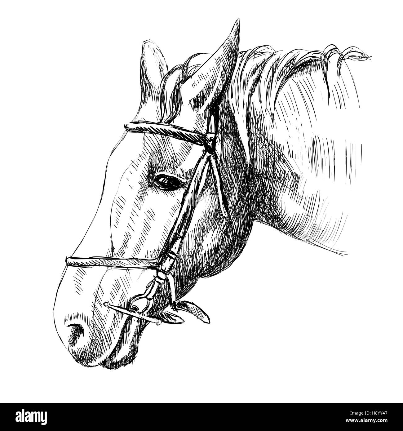 Horse Head Sketch For Stock Photos & Horse Head Sketch For
