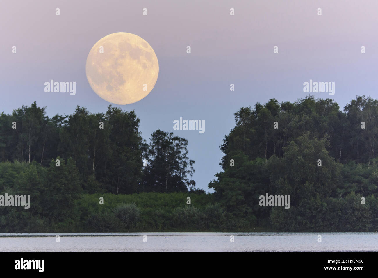 full moon over the dammer bergsee near damme (dümmer), vechta district, lower saxony, germany - Stock Image