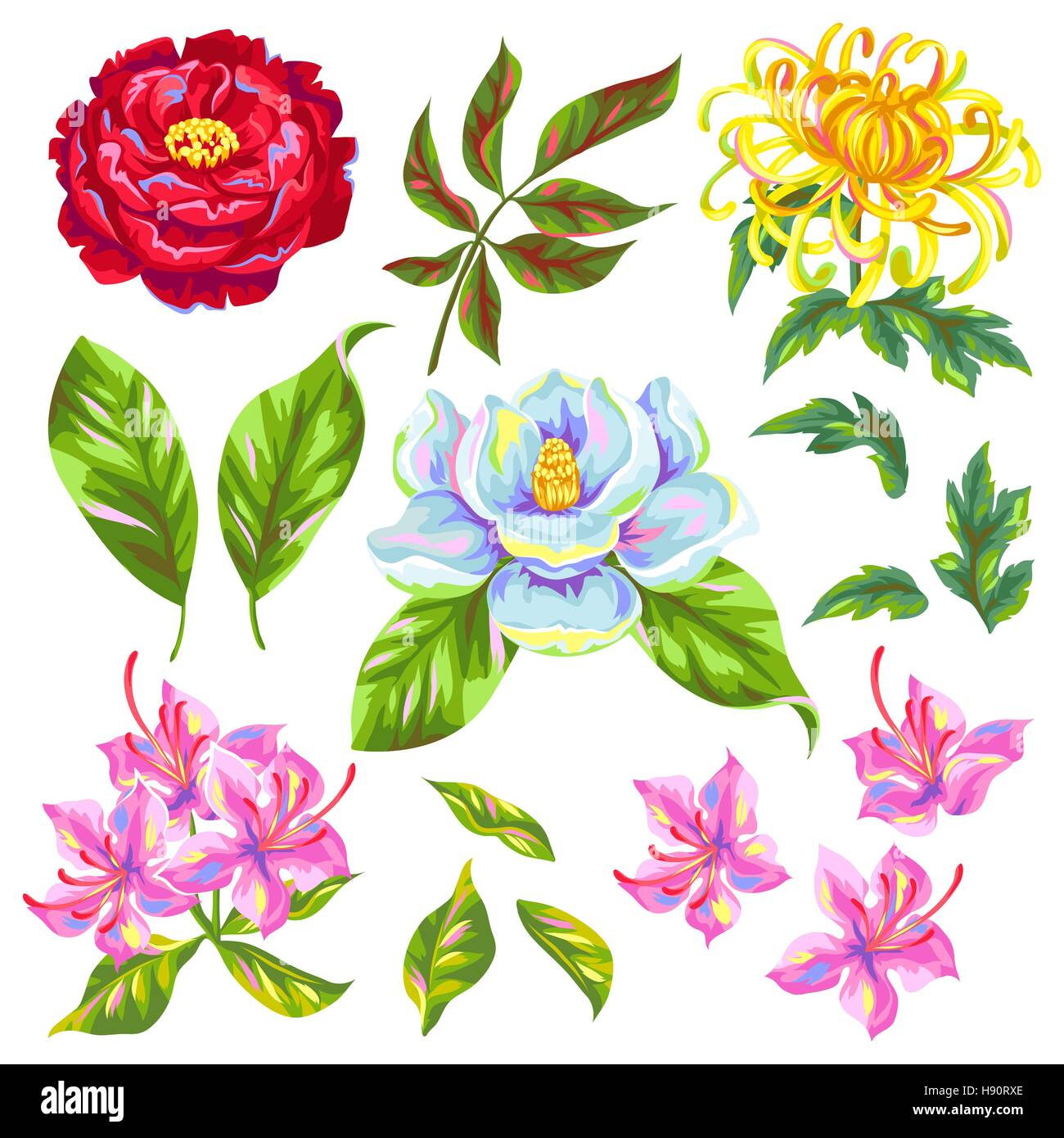 China flowers set. Bright buds of magnolia, peony, rhododendron and chrysanthemum - Stock Vector