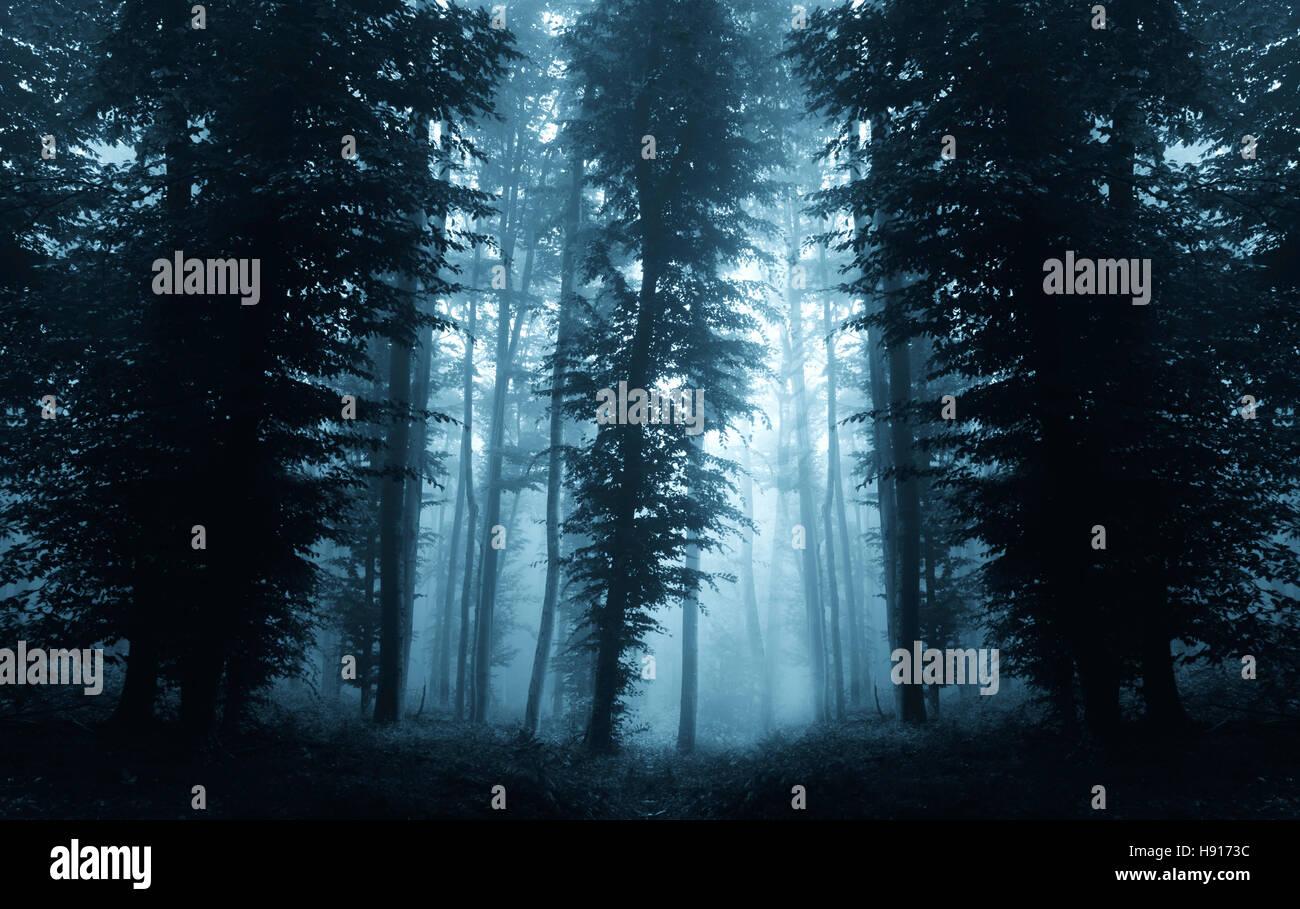 dark forest landscape background - Stock Image