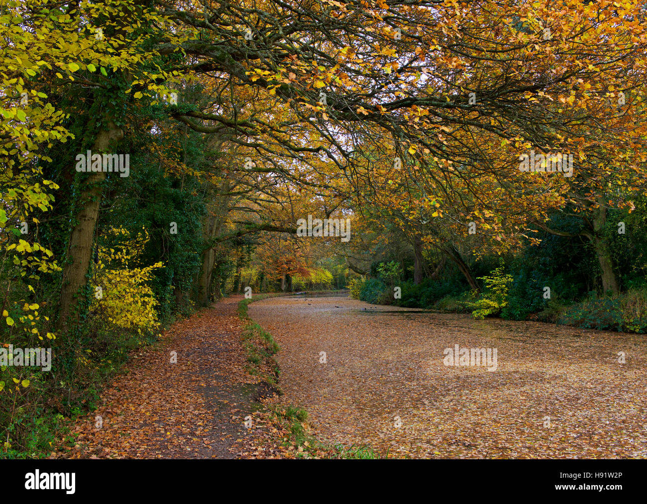 The Basingstoke Canal at Winchfield, Hampshire, England UK - Stock Image