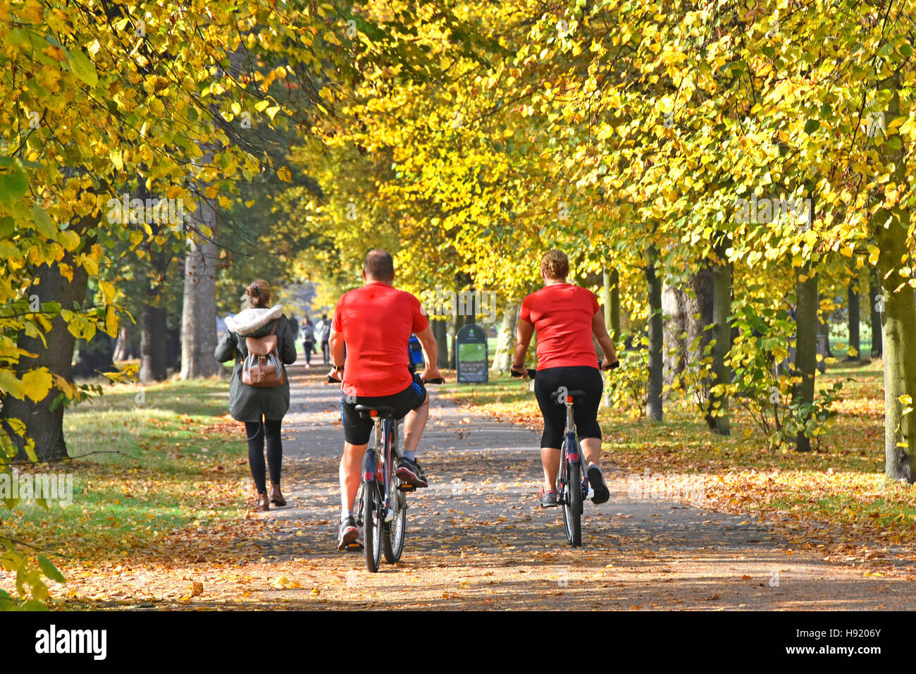 Kensington Gardens London UK Royal Park autumn trees leaves couple on Santander bike hire cycling on shared permitted - Stock Image