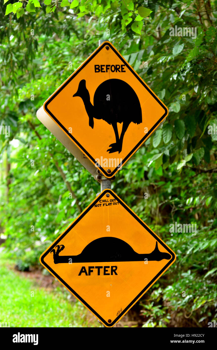 Cassowary warning sign on a road in Daintree National Park in the tropical north of Queensland, Australia. Cassowary Stock Photo