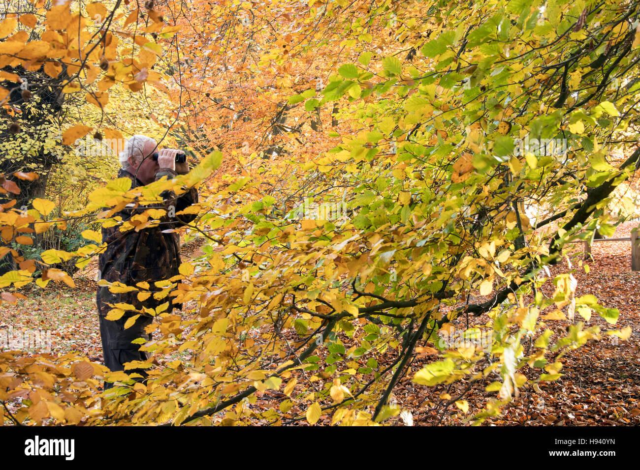 Senior male hiding in woodland with binoculars - Stock Image