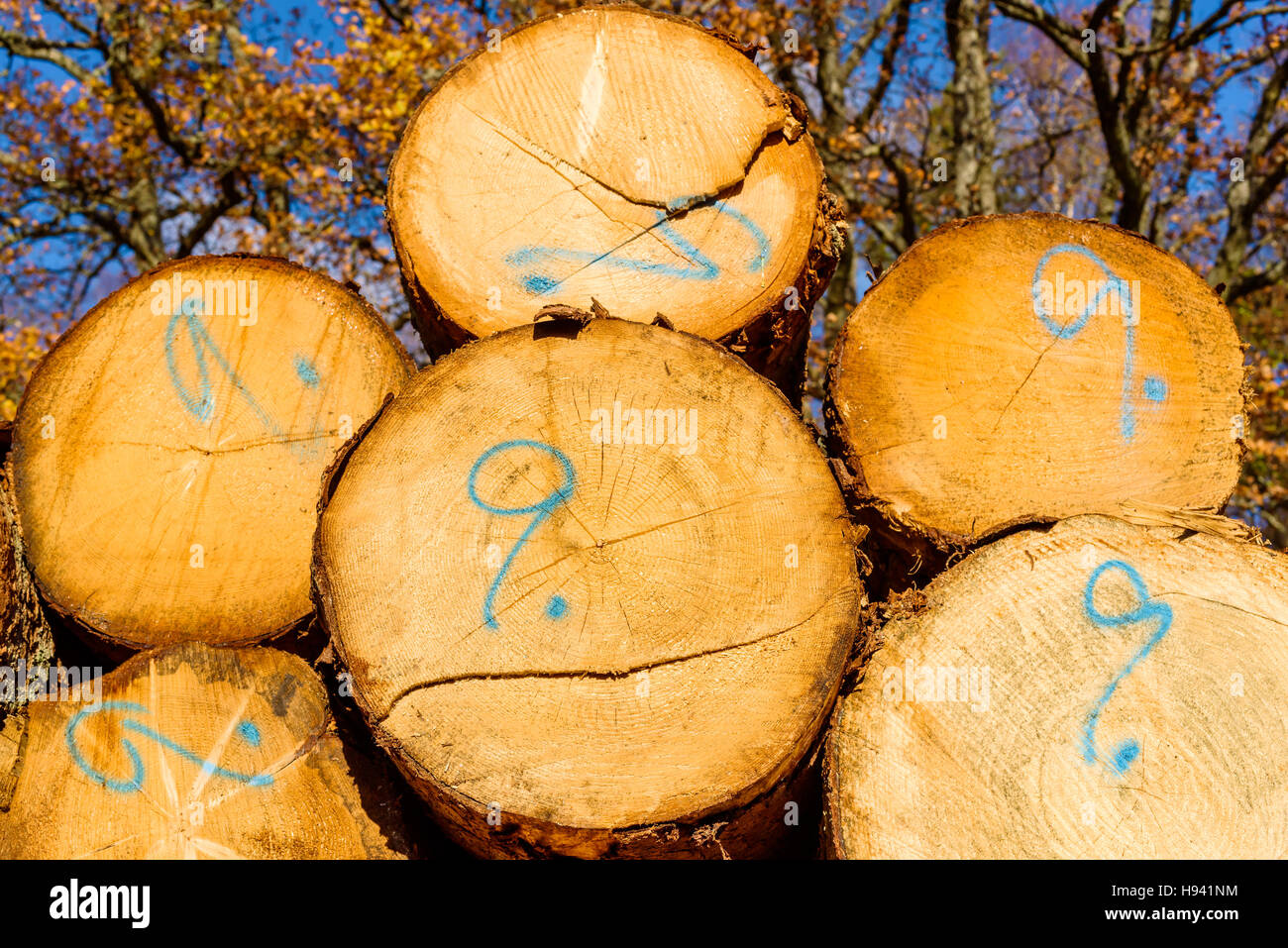 Ends of timber or lumber with the number nine written on them. The number indicates quality or usage. - Stock Image