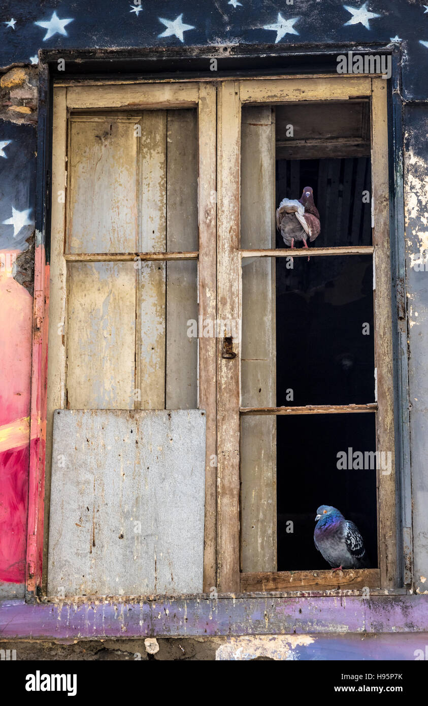 Pigeons perched on broken window frame in derelict building which has been painted with a colorful mural. - Stock Image