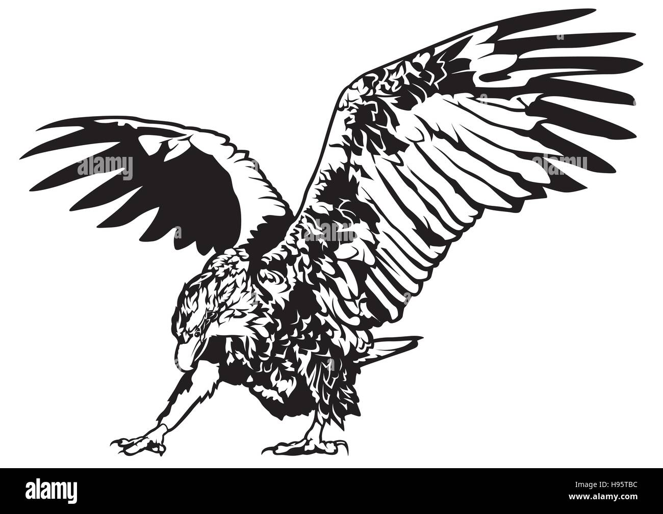 black and white eagle drawing stock photos amp black and