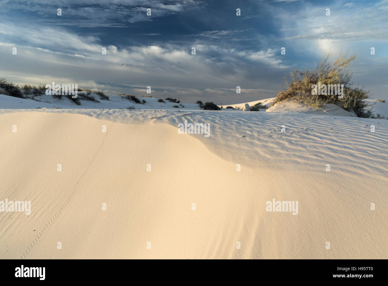 Sand dunes with animal track at White Sands National Monument near Alamogordo, New Mexico, USA - Stock Image
