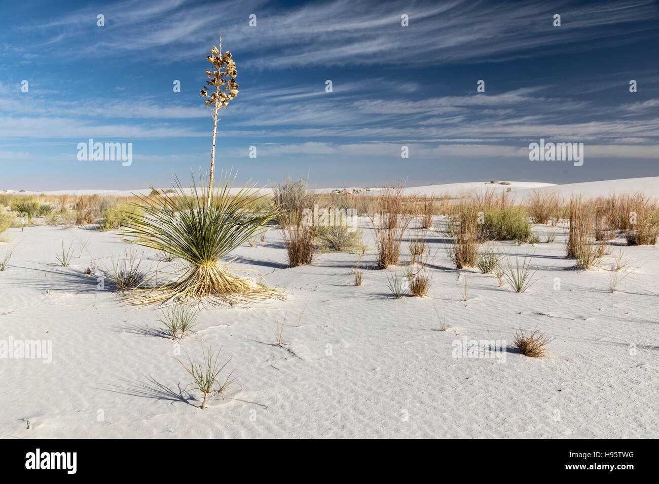 Sand dunes and yucca plants at White Sands National Monument near Alamogordo, New Mexico, USA - Stock Image