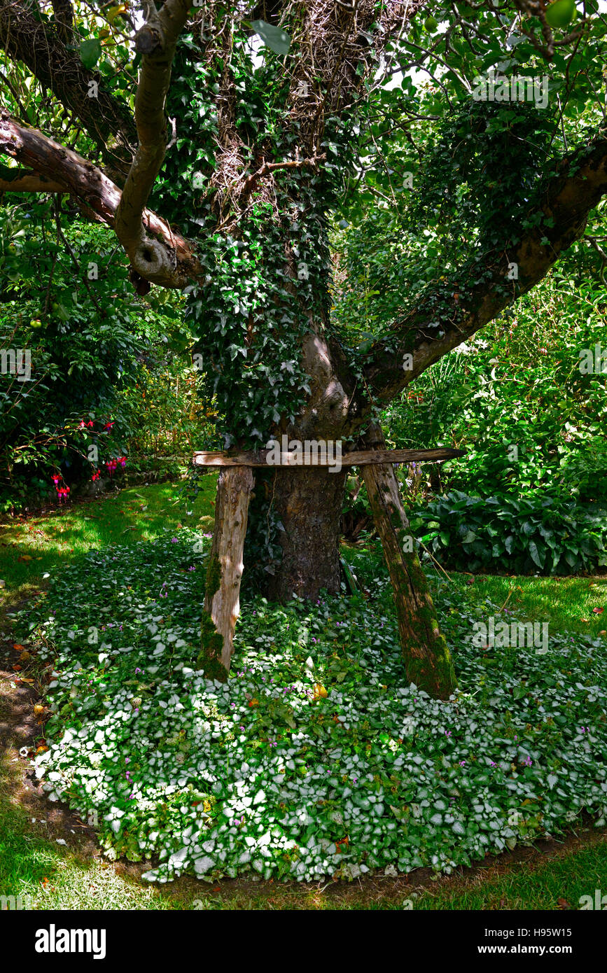 propped up tree support supported prop aid assist old weak damaged tree stand upright prevent fall falling preventing - Stock Image