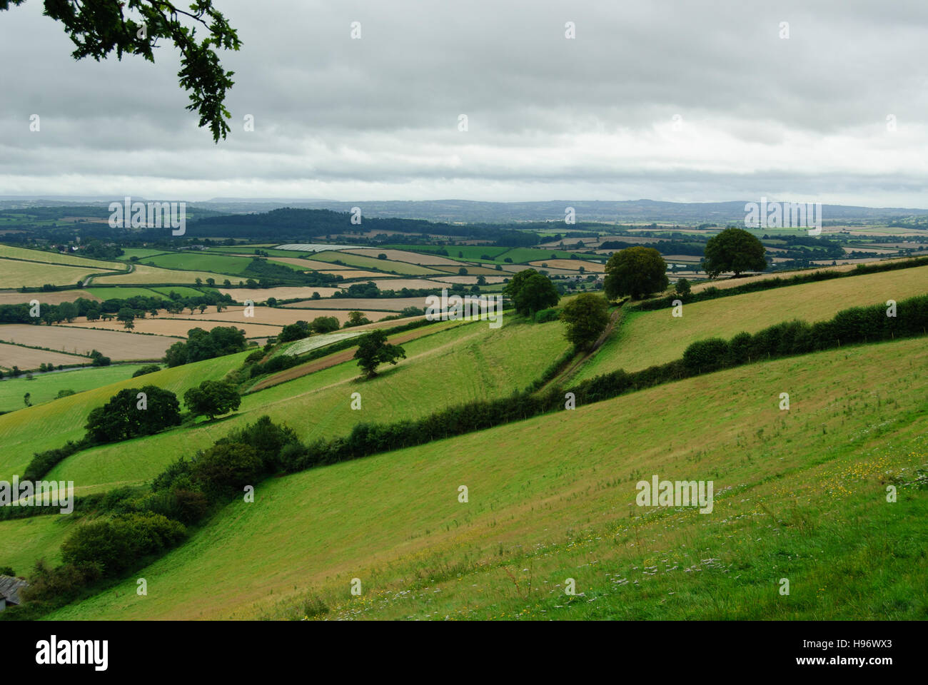 Typical English countryside landscape with hills, fields and hedgerows in Devon - Stock Image
