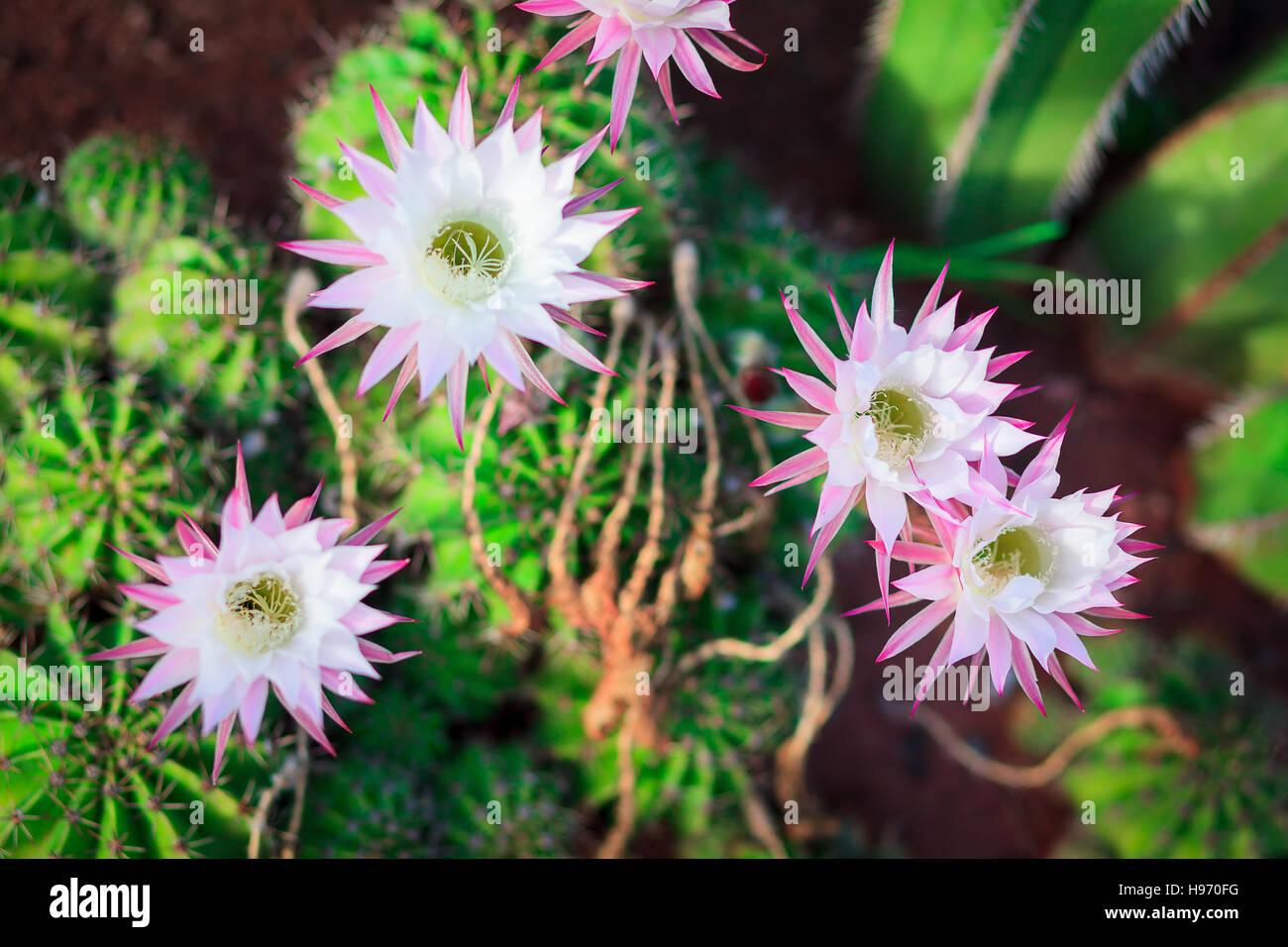 Cactus Bouquet Stock Photos & Cactus Bouquet Stock Images - Alamy