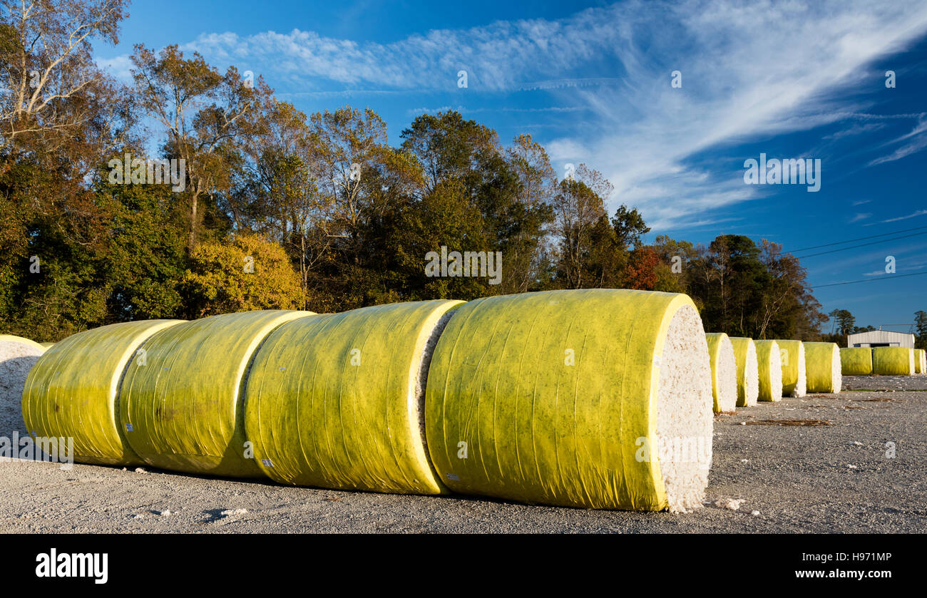 Raw cotton in colorful rolls awaits cotton gin where it seeds and debris will be removed, Suffolk, Virginia, USA - Stock Image