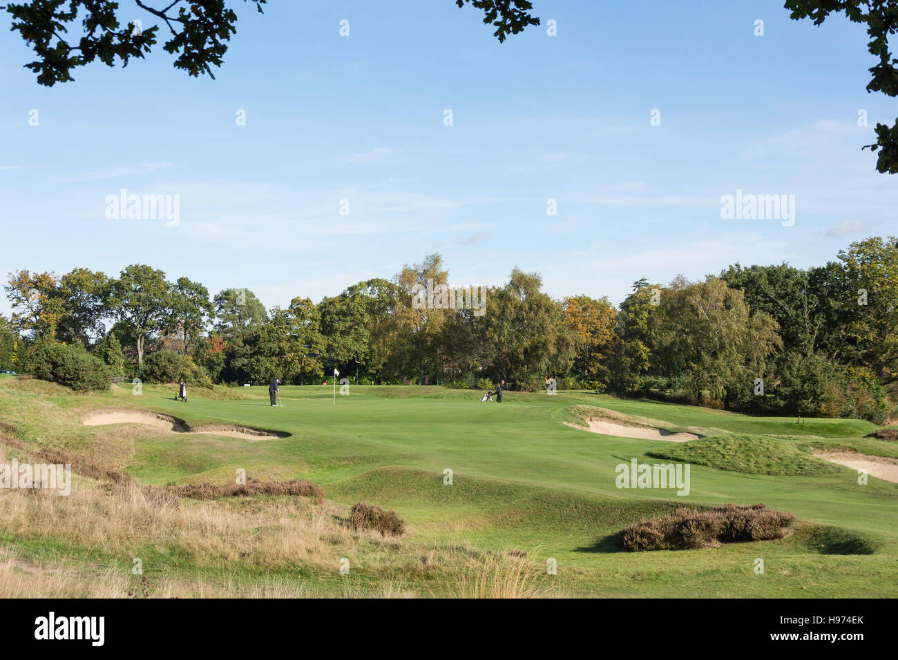 Green with bunkers, Sunningdale Golf Course, Sunningdale, Berkshire, England, United Kingdom - Stock Image