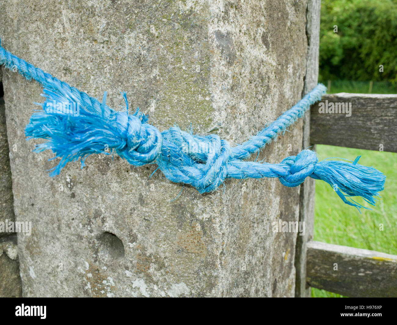 Knot in blue Nylon Rope - Stock Image